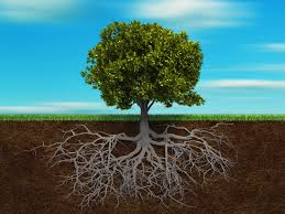 deeply-rooted-1